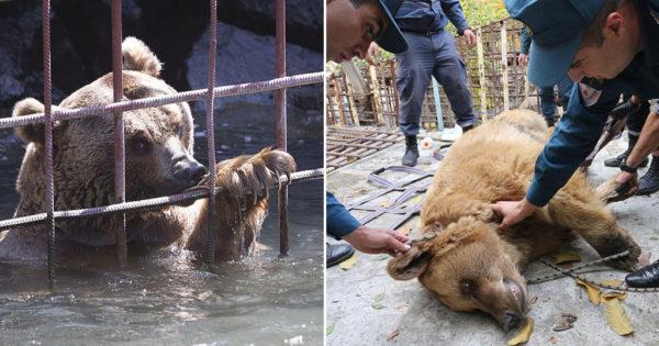 Πολλά μπράβο: Ελευθερώθηκαν αρκούδες που έβλεπαν τον κόσμο να τρώει σε εστιατόριο της Αρμενίας