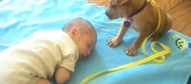 Σκύλος σκυλί παιδί μωρό και σκύλος μωρό