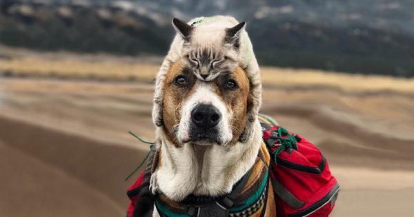 Γάτα και σκύλος λατρεύουν να ταξιδεύουν μαζί και οι φωτογραφίες τους είναι επικές
