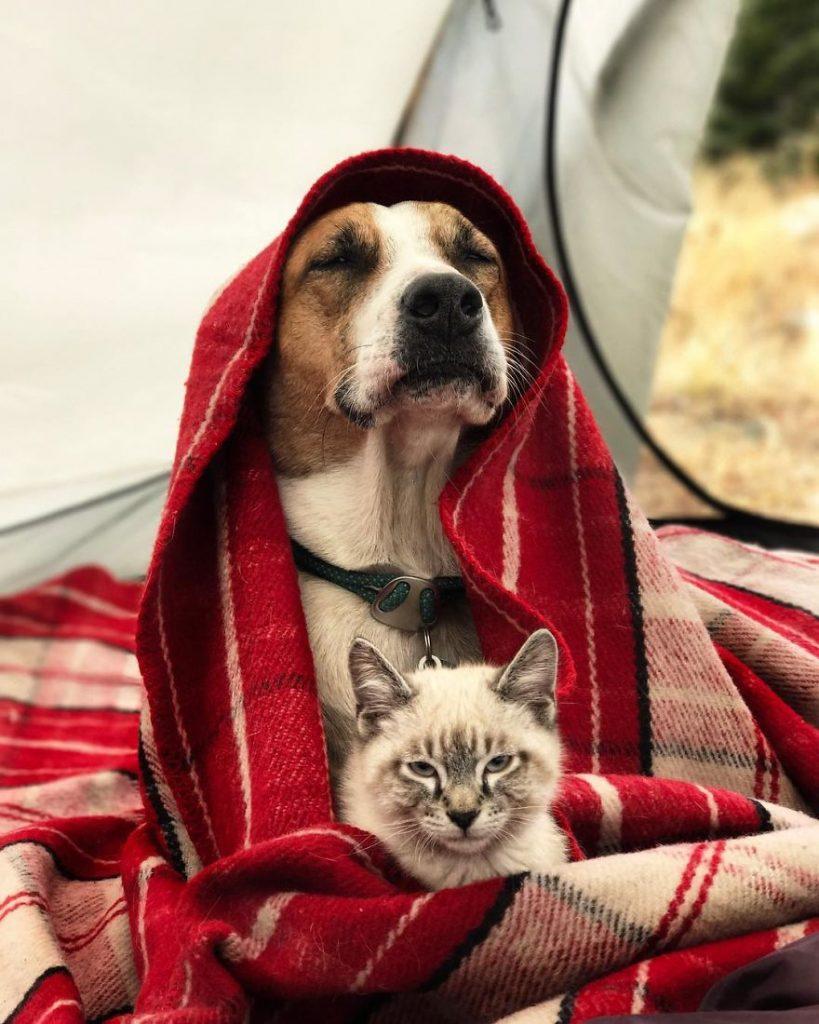 Σκύλος γάτα και σκύλος Γάτα