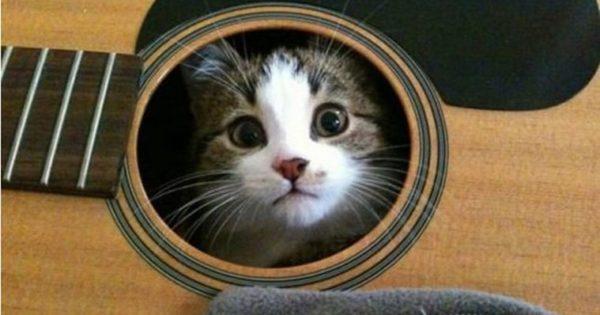 Παντού χωράει ένα γατί !