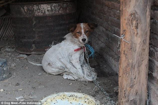 σκύλοι κουτάβι θανάτωση σκύλων