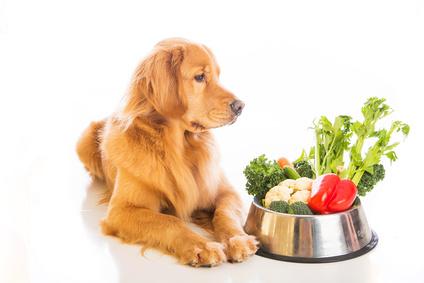 συμβουλές σκύλος μακροζωία Σκύλος