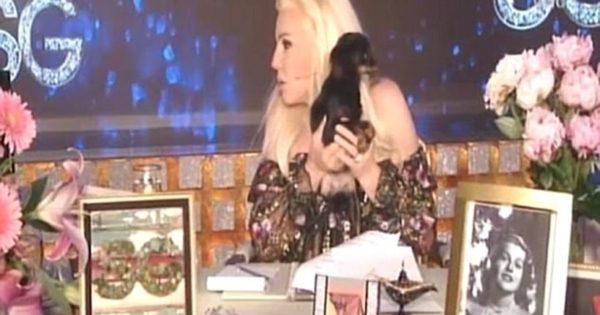 Σκυλάκι… «τα έκανε» πάνω στην μπλούζα της «Όπρα της Αργεντινής»! (video)