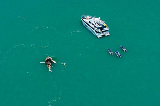 φάλαινα κροκόδειλος καρχαρίας
