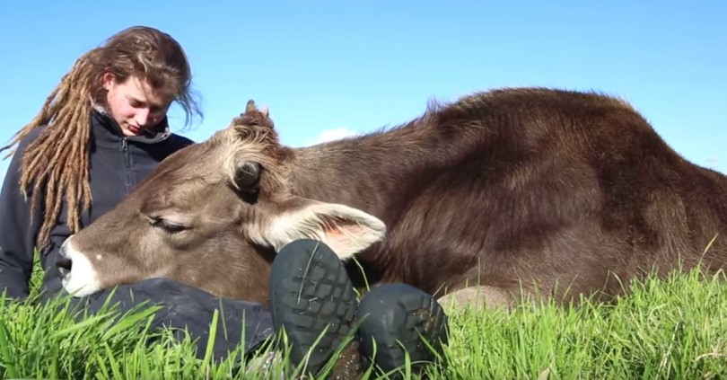 Rescued_Bull_Snuggles_With_His_F_4344192133-810x423