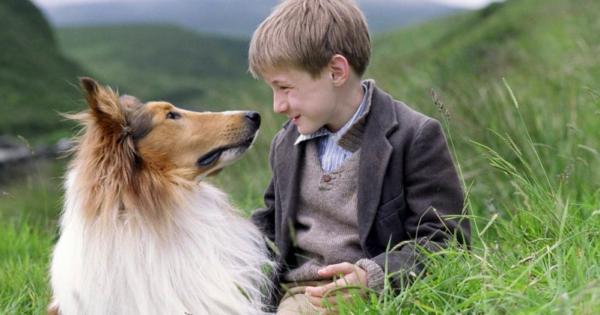 Θυμάστε την Λάσι; Δεν θα πιστεύετε τι απέγινε το σκυλί της γνωστής σειράς