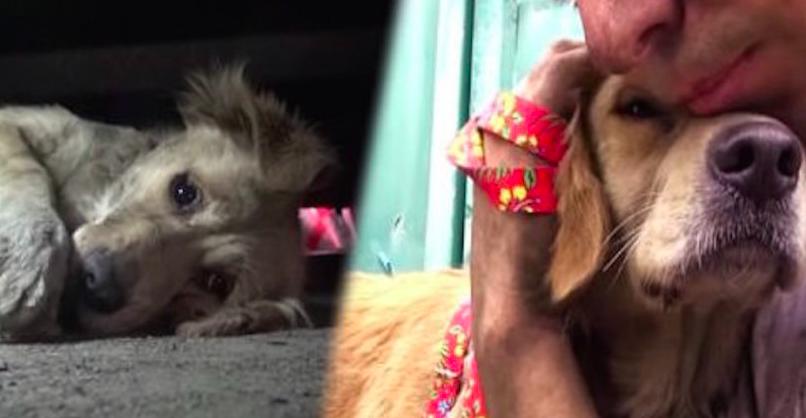 Λαμπραντόρ διάσωση σκύλου