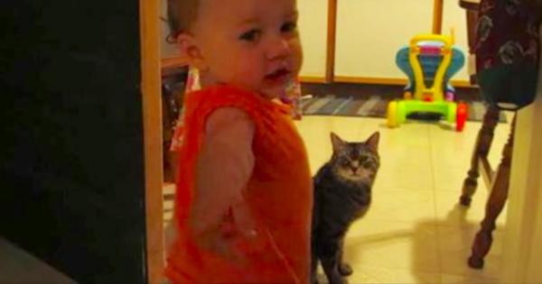 Έλεγε στους Γείτονες ότι η Κόρη του Μιλάει με την γάτα αλλά κανείς δεν τον πίστευε. Τότε τους έδειξε ΑΥΤΟ!