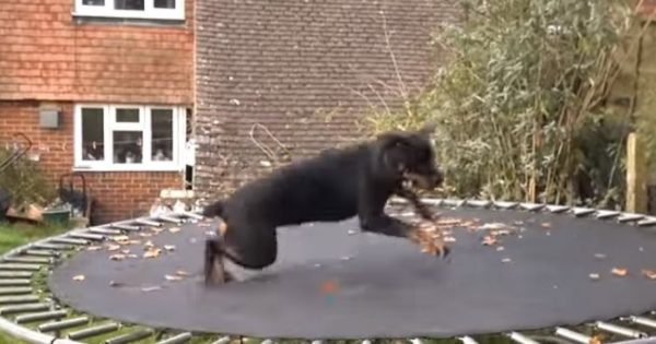 Βίντεο: Σκύλος τα δίνει όλα στο τραμπολίνο!