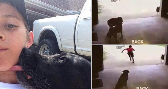 Ραγίζει καρδιές! Αγοράκι έμπαινε κρυφά στο γκαράζ για να αγκαλιάζει τον σκύλο (ΒΙΝΤΕΟ)