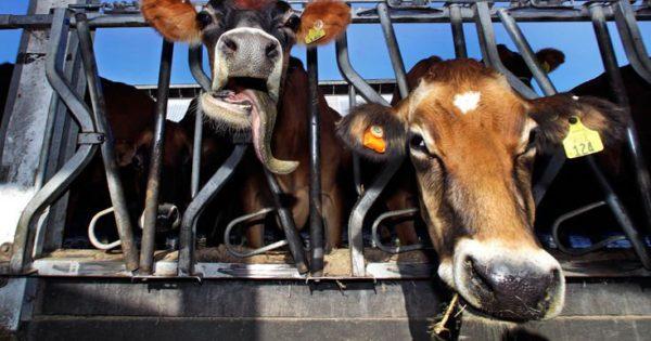 Τι θα συνέβαινε σε μια χώρα αν γινόμασταν όλοι χορτοφάγοι