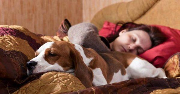 7 πράγματα που συμβαίνουν αν μοιράζεστε το κρεβάτι σας με τον σκύλο σας