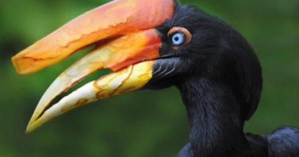 Βίντεο: Τα 10 πιο περίεργα πτηνά που υπάρχον στον κόσμο