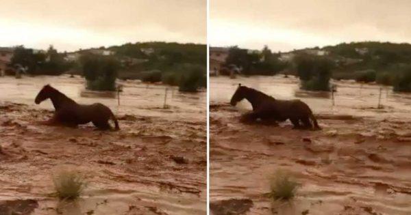 Άλογο παλεύει με χείμαρρο στη Μάνδρα και βγαίνει ζωντανό