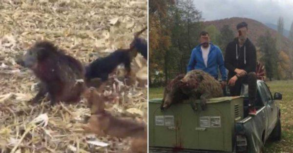 Έλληνες κυνηγοί κατηγορούνται για βασανισμό αγριογούρουνου μετά από αυτό το βίντεο