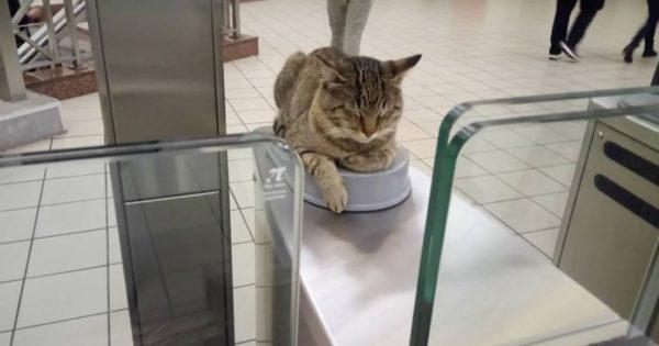 Ο γάτος «ελεγκτής» στο Μοναστηράκι είναι ο πιο διάσημος της Αθήνας