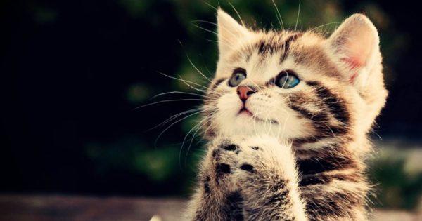 Δεν μπορείς να πεις σε μια γάτα… πως να κάτσει (φωτό)