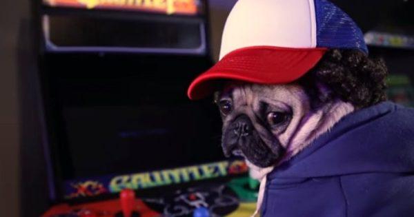O σκύλος που παίζει όλους τους ρόλους του «Stranger Things» (vid)