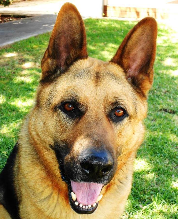 Σκύλος Αστυνομικός