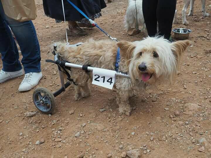 κτηνίατρος κατοικίδια με κινητικά προβλήματα αναπηρικά αμαξίδια