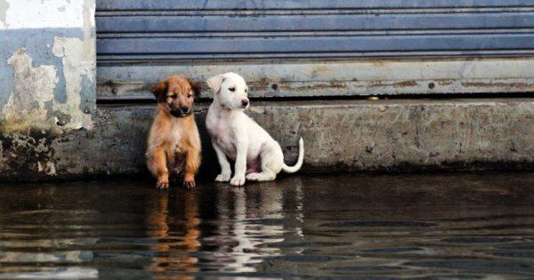Τα αδέσποτα της Δ.Αττικής εκπέμπουν SOS: Πώς μπορείτε να βοηθήσετε φιλοξενώντας προσωρινά κάποιο ζώo