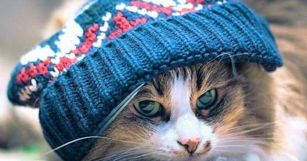Πώς θα προστατεύσετε τη γάτα σας από το κρύο