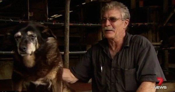 Πέθανε ο γηραιότερος σκύλος του κόσμου σε ηλικία 30 ετών (βίντεο)