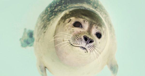 Δείτε τα 10 πιο γλυκά ζώα που μπορούν να σας σκοτώσουν