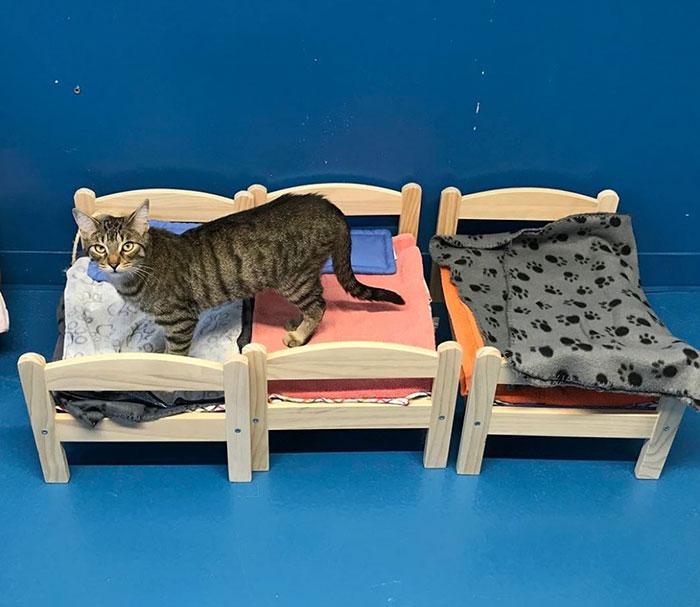 γάτες IKEA