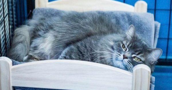 Η ΙΚΕΑ δώρισε κρεβατάκια σε γάτες που μένουν σε καταφύγιο για να μην κοιμούνται μέσα σε κλουβιά