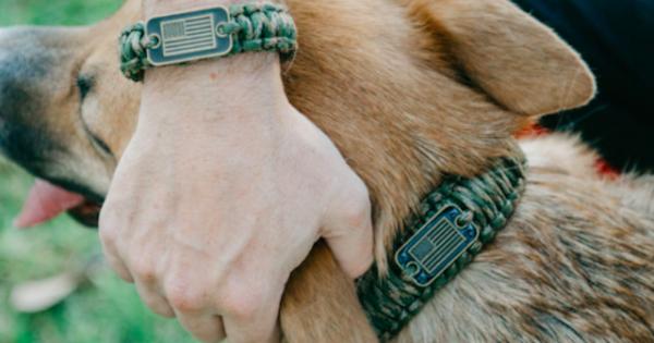 Μήπως το κολάρο πνίγει τον σκύλο σου; Κάνε τη σωστή επιλογή!