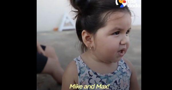 Ένα μοναδικό βίντεο: Η συγκινητική επανένωση ενός μικρού κοριτσιού με τα σκυλιά της!