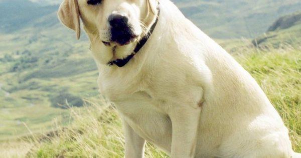 Έρευνα: Όσοι έχουν σκύλο ζουν περισσότερα χρόνια