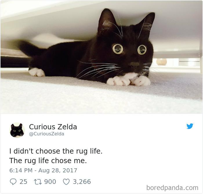 γάτα twitter zelda twitte
