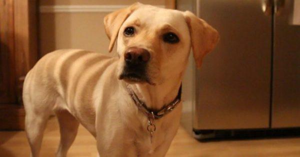 9 τρόποι να «μιλήσετε» στη γλώσσα του σκύλου σας και να του «πείτε» πόσο πολύ τον αγαπάτε