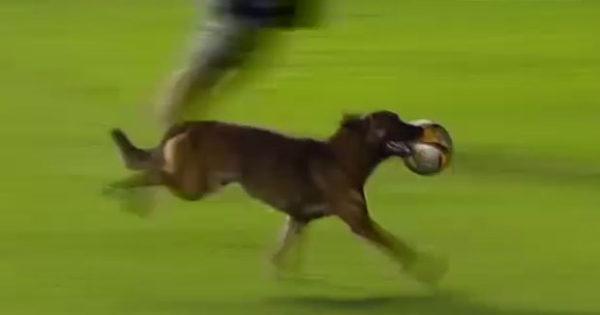 Βολιβία: Ο «Μέσι» των σκύλων (video)