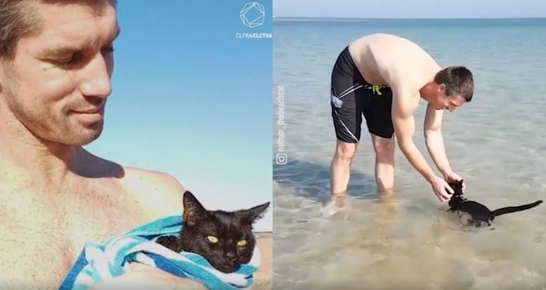 γάτες και νερό γάτα και νερό Γάτα