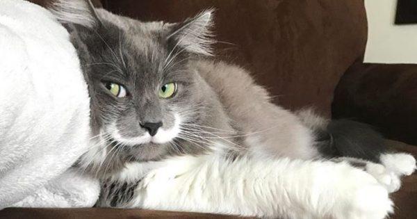 Το είδαμε και αυτό! Γάτα με μουστάκι!