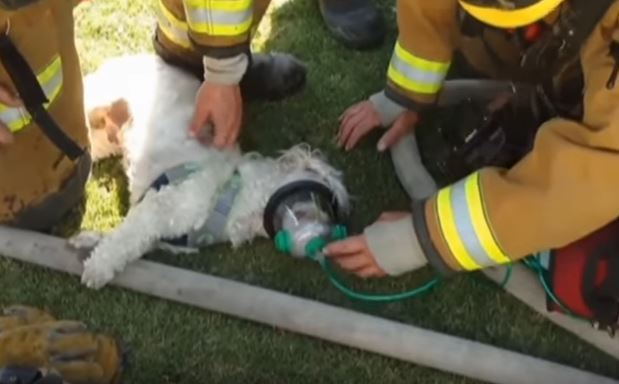 Σκύλος πυροσβέστης διάσωση σκύλων διάσωση