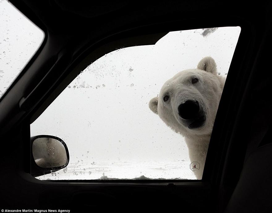 polar_new_2