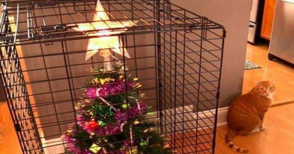 Οι πιο «πρωτότυπες» ιδέες για να «σώσετε» το χριστουγεννιάτικο δέντρο από τα κατοικίδια