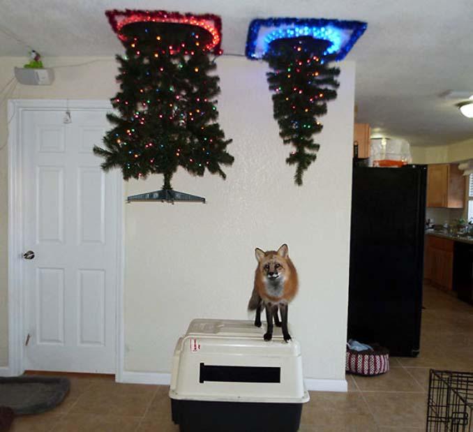 9b1dd4281a22 Οι πιο «πρωτότυπες» ιδέες για να «σώσετε» το χριστουγεννιάτικο δέντρο από  τα κατοικίδια