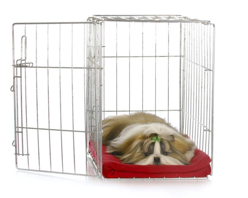 σκύλος συμπεριφορά σκύλος προσαρμογή σκύλος μόνος στο σπίτι