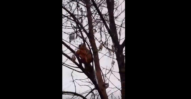 σκίουρος λιχούδης σκίουρος