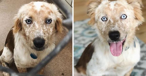 Υιοθέτησε σκύλο για τα γενέθλιά της κι οι φωτογραφίες του πριν και του μετά μιλάνε από μόνες τους!