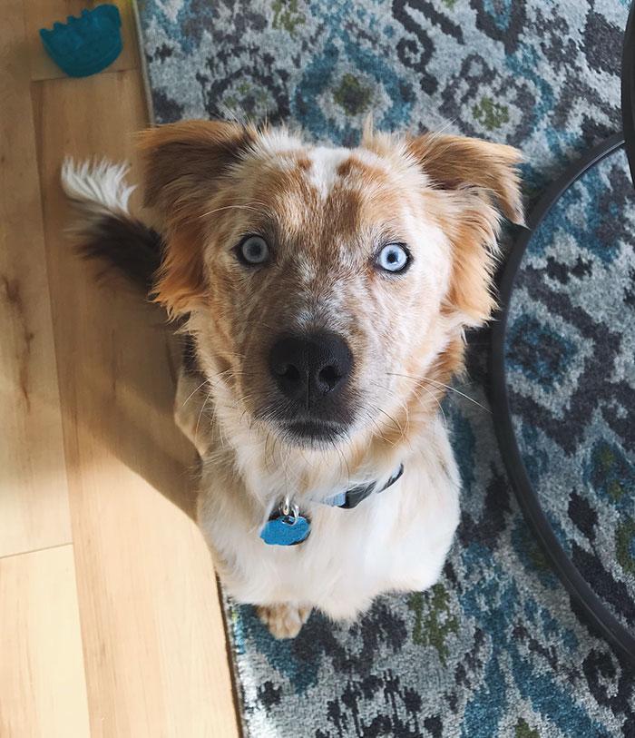σκύλος υιοθεσία Σκύλος σκύλοι