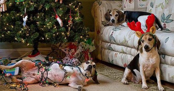 Γάτες και σκύλοι που κατέστρεψαν τα Χριστούγεννα