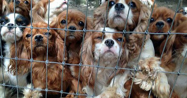 Εθελοντές διασώζουν 108 σκυλιά από παράνομο εκτροφείο
