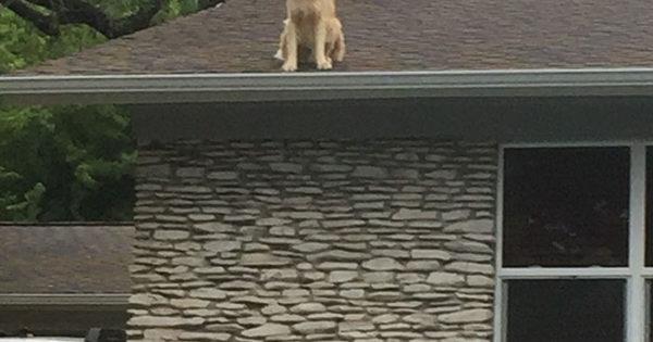 Οικογένεια φτιάχνει πινακίδα για να εξηγήσει γιατί ο σκύλος τους είναι στην σκεπή του σπιτιού τους και γίνεται viral